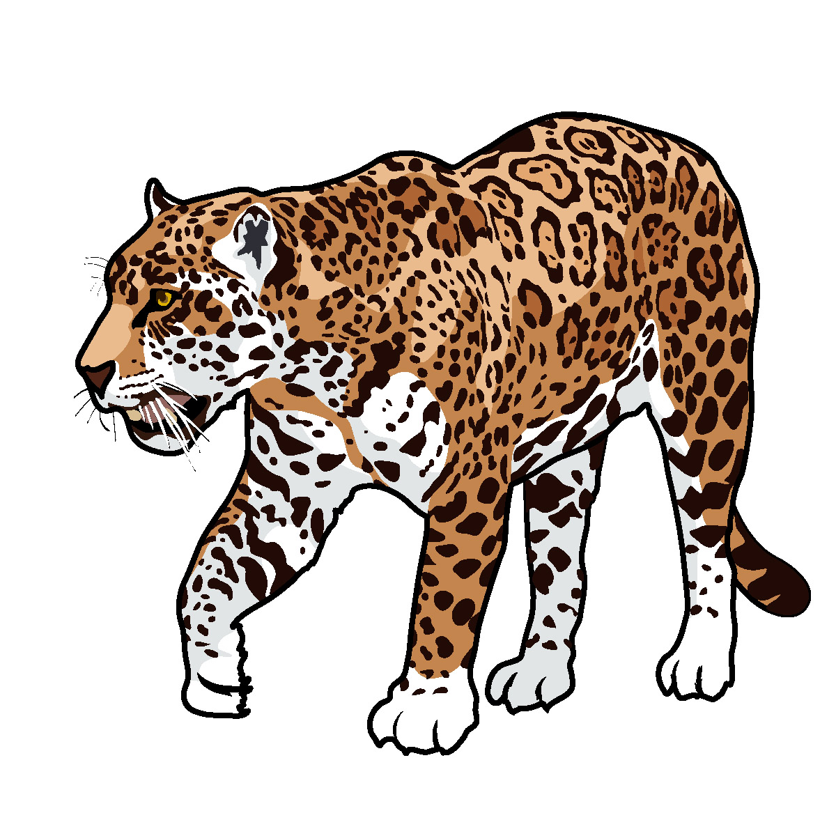 Best Jaguar Clipart #12722 - Clipartion.com