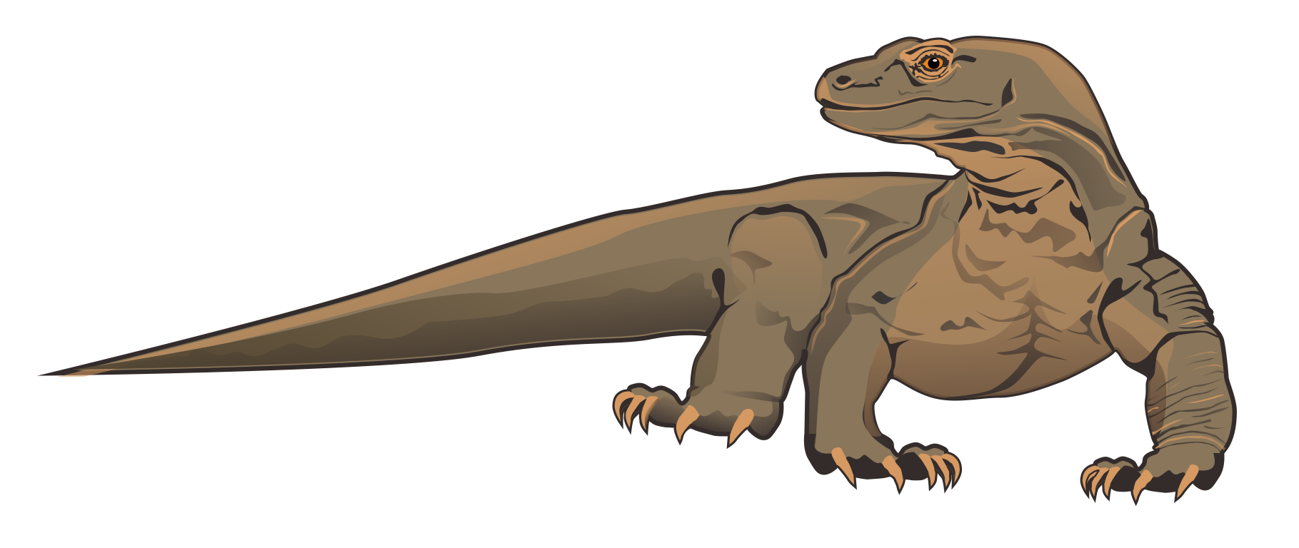 best komodo dragon clipart 16469 clipartion com