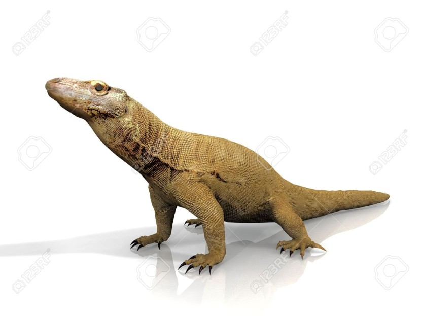Komodo Dragon Images Stock Pictures Royalty Free Komodo Dragon