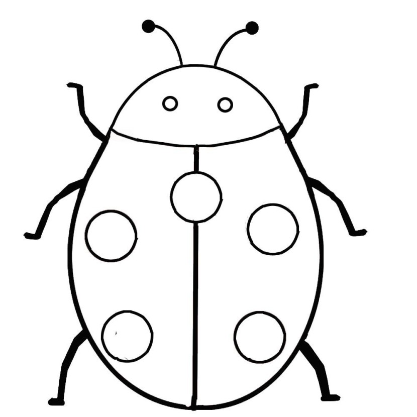 Ladybug Coloring Pages Drawing Kids