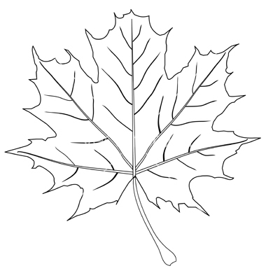 Leaf Outline Stroke Vectorrelato Image 0 Vectorstock