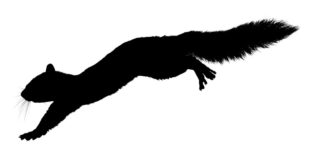 Leaping Squirrel Silhouette Flickr Photo Sharing