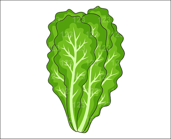 Best Lettuce Clipart #17486 - Clipartion.com: clipartion.com/free-clipart-17486