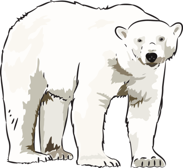 Polar Bear Clipart Clipartion Com