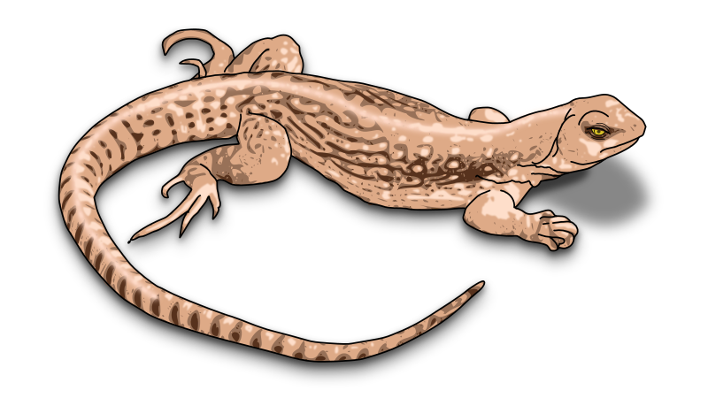 Lizard Brown Animals L Lizard Clipart