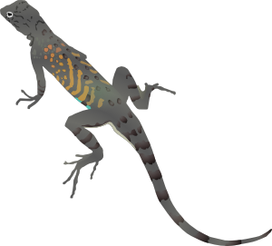 Lizard Clipart Black And White Free Clipart Images