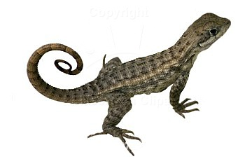 Lizard Clipart Gallery