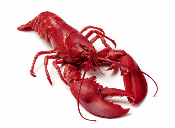 Lobster Illustrations And Clipart Free Clip Art Images