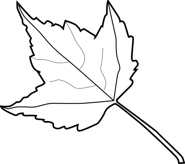 Maple Leaf Outline Coloring Page Kids Play Color