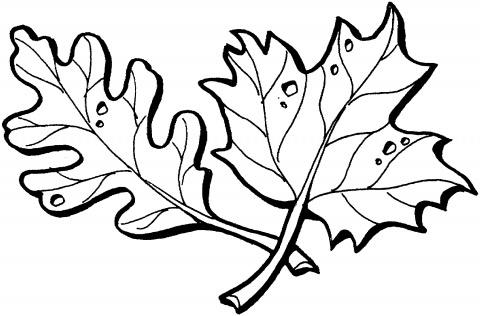 Maple Leaf Printable