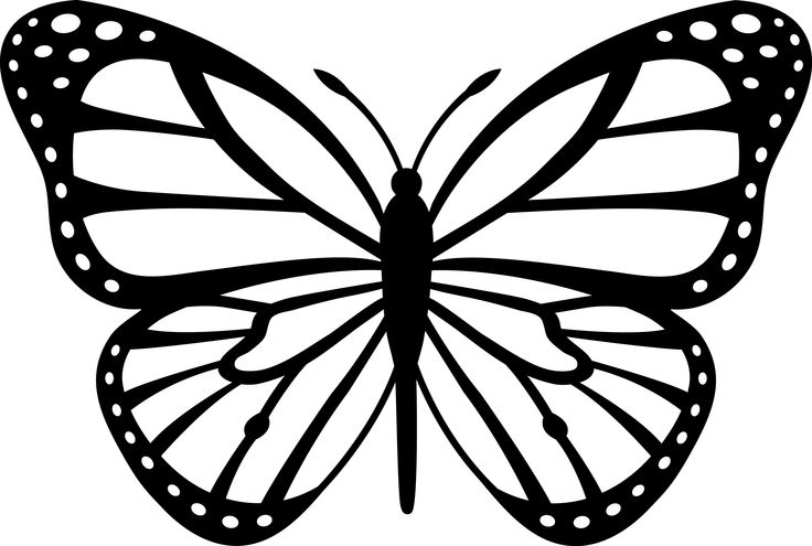 Monarch Butterfly Black Amp White 5 3 Pixels Reference