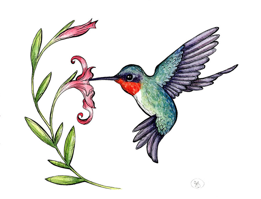 Best Hummingbird Clipart #11921 - Clipartion.com
