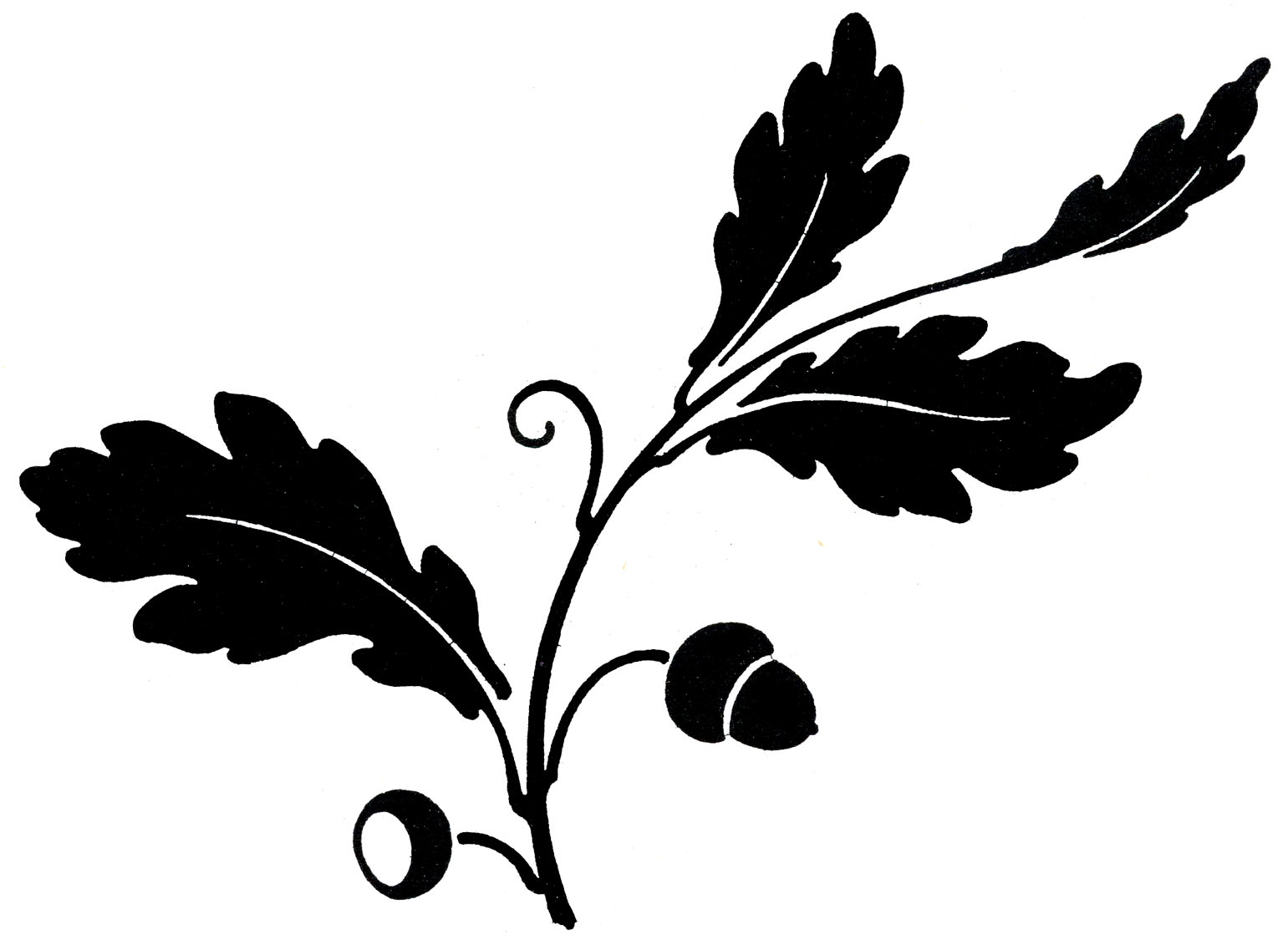 Fall Leaves Clip Art Black And White 21735
