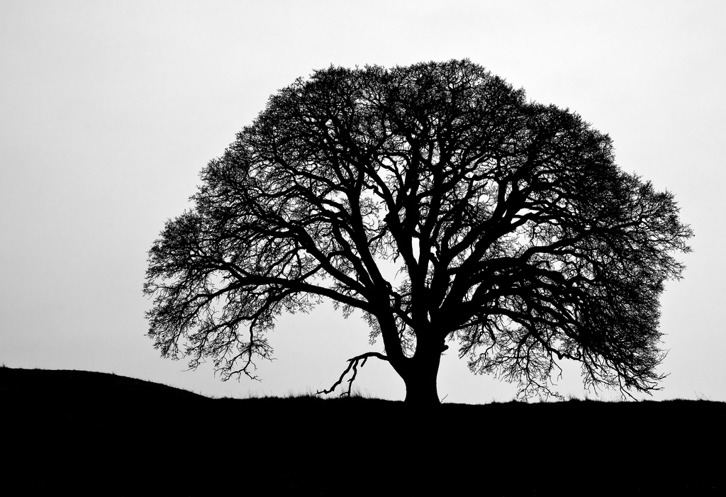 Best Oak Tree Silhouette #17906 - Clipartion.com