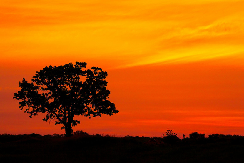 Oak Tree Silhouette Against Red Sky Flickr Photo Sharing