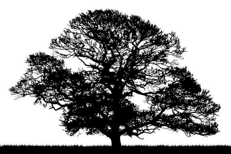 Oak Tree Silhouette Phototrinity9 Photobucket