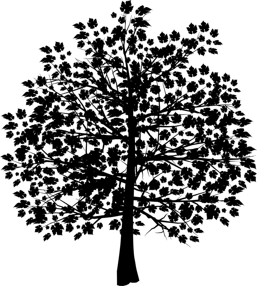 Oak Tree With Roots Silhouette Courseimage