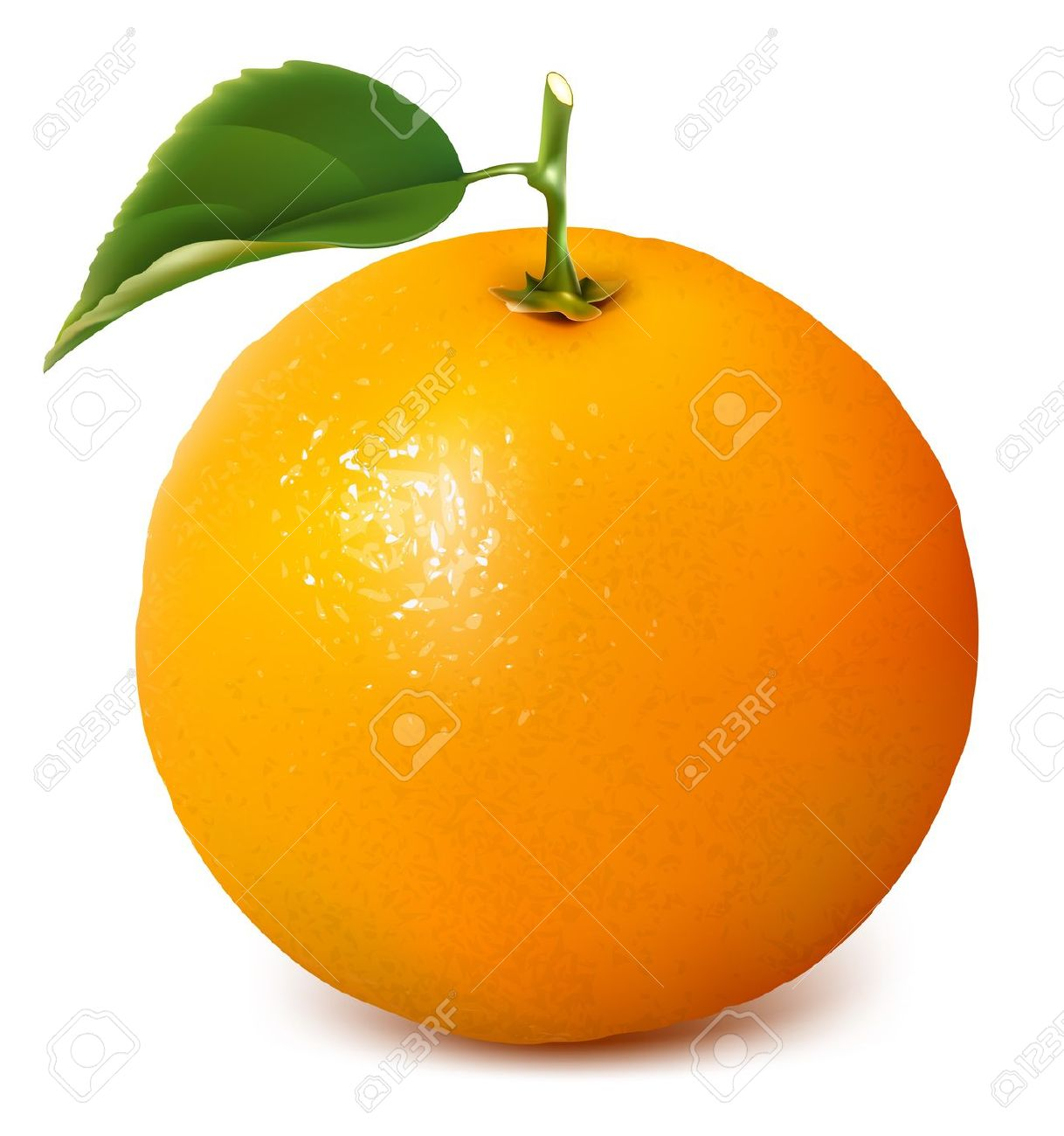 Orange Fruit Vector Best Orange Cli...