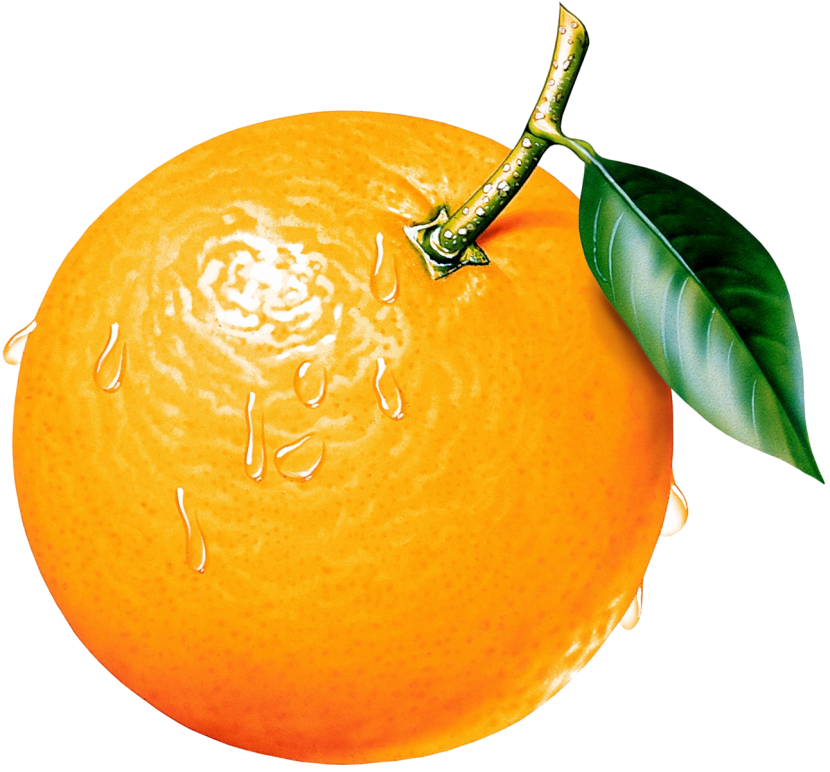 Orange Tree Clipart Free Clipart Images