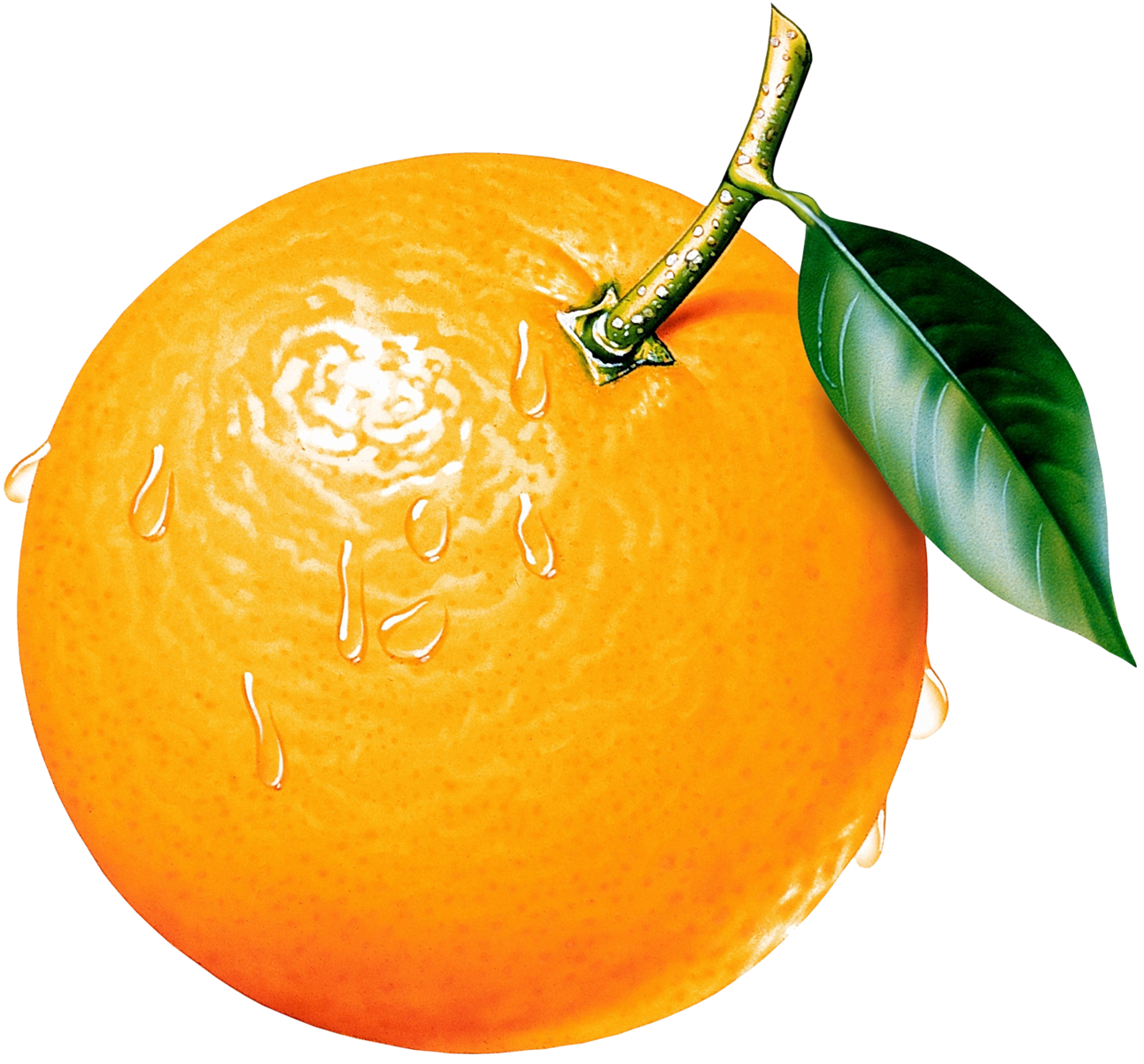 Best Orange Clip Art #16691 - Clipartion.com