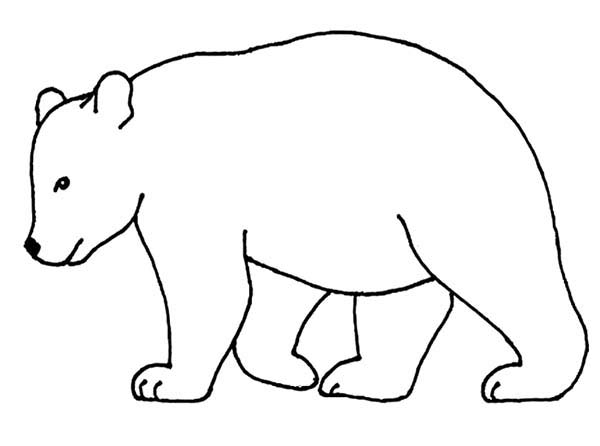 Outline Of A Bear