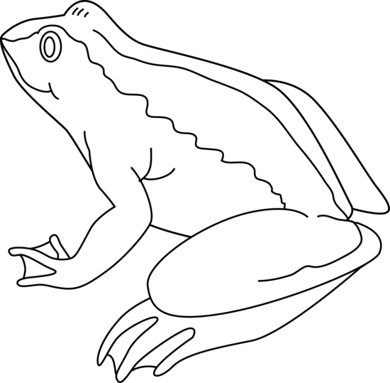 Outline Of A Frog