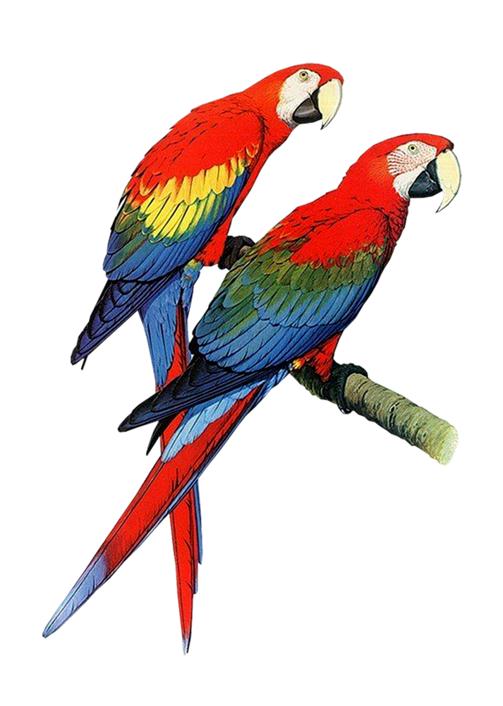 best parrot clipart 16716 clipartioncom