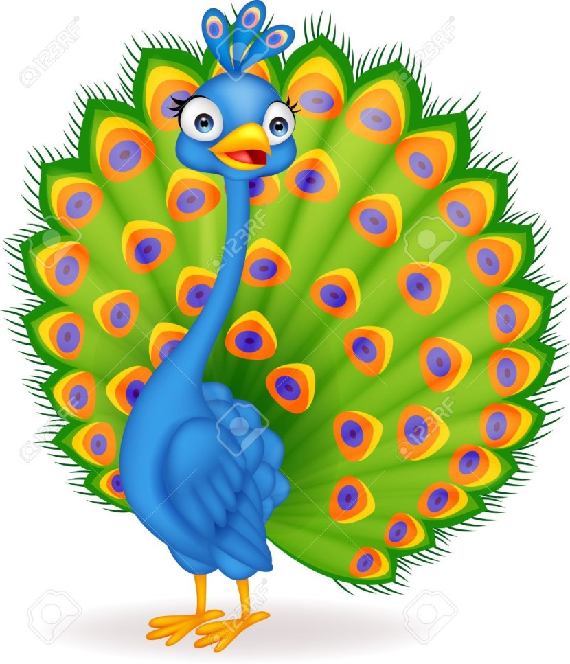 Peacock Design Cliparts Stock Vector And Royalty Free Peacock