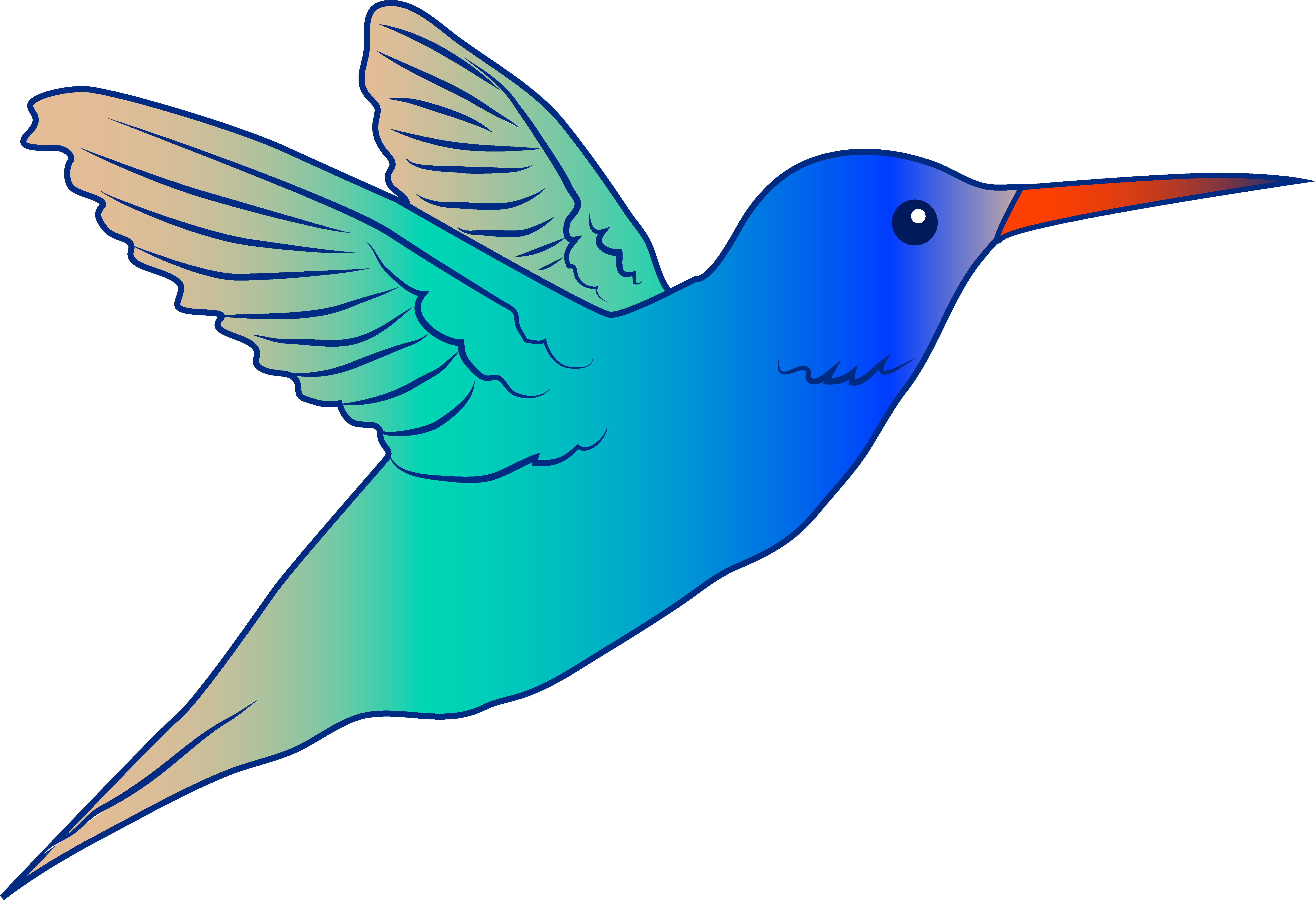 Pictures Of A Hummingbird Clipart