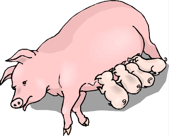 Pig Clipart Free Clip Art Images