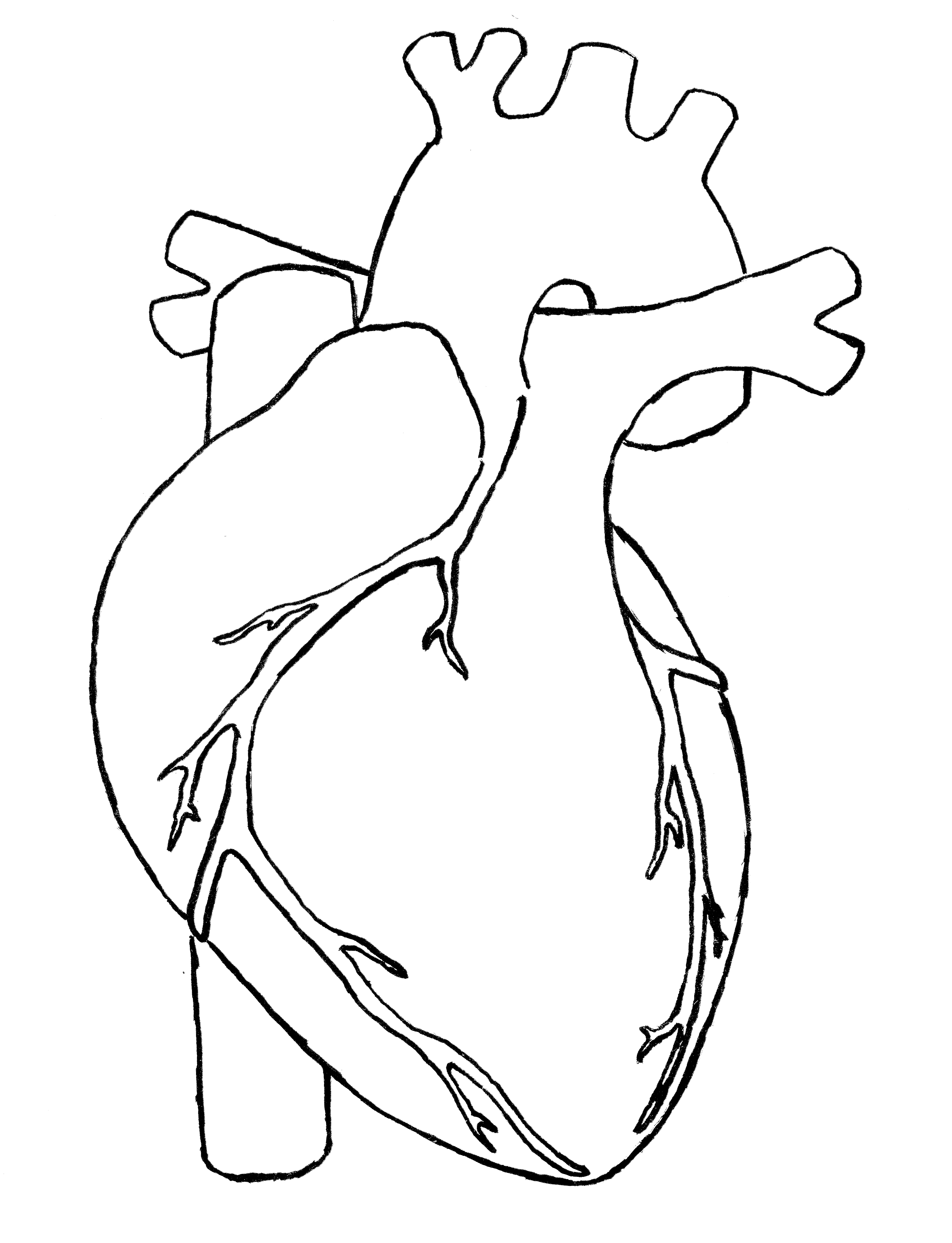 Best Real Heart Clipart #13466 - Clipartion.com