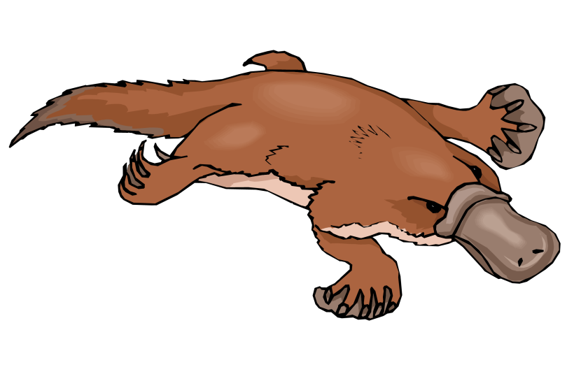 Platypus Free Clipart Free Clip Art Images
