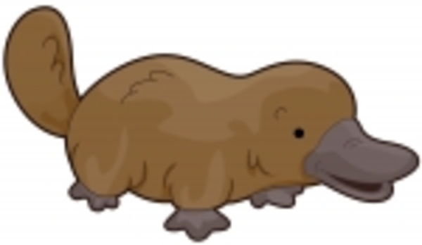 Platypus Free Images At Vector Clip Art Online