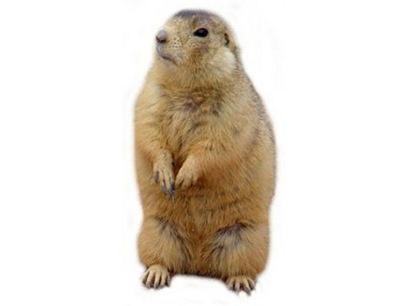 Prairie Dog Clipart Best Clip Art Blog