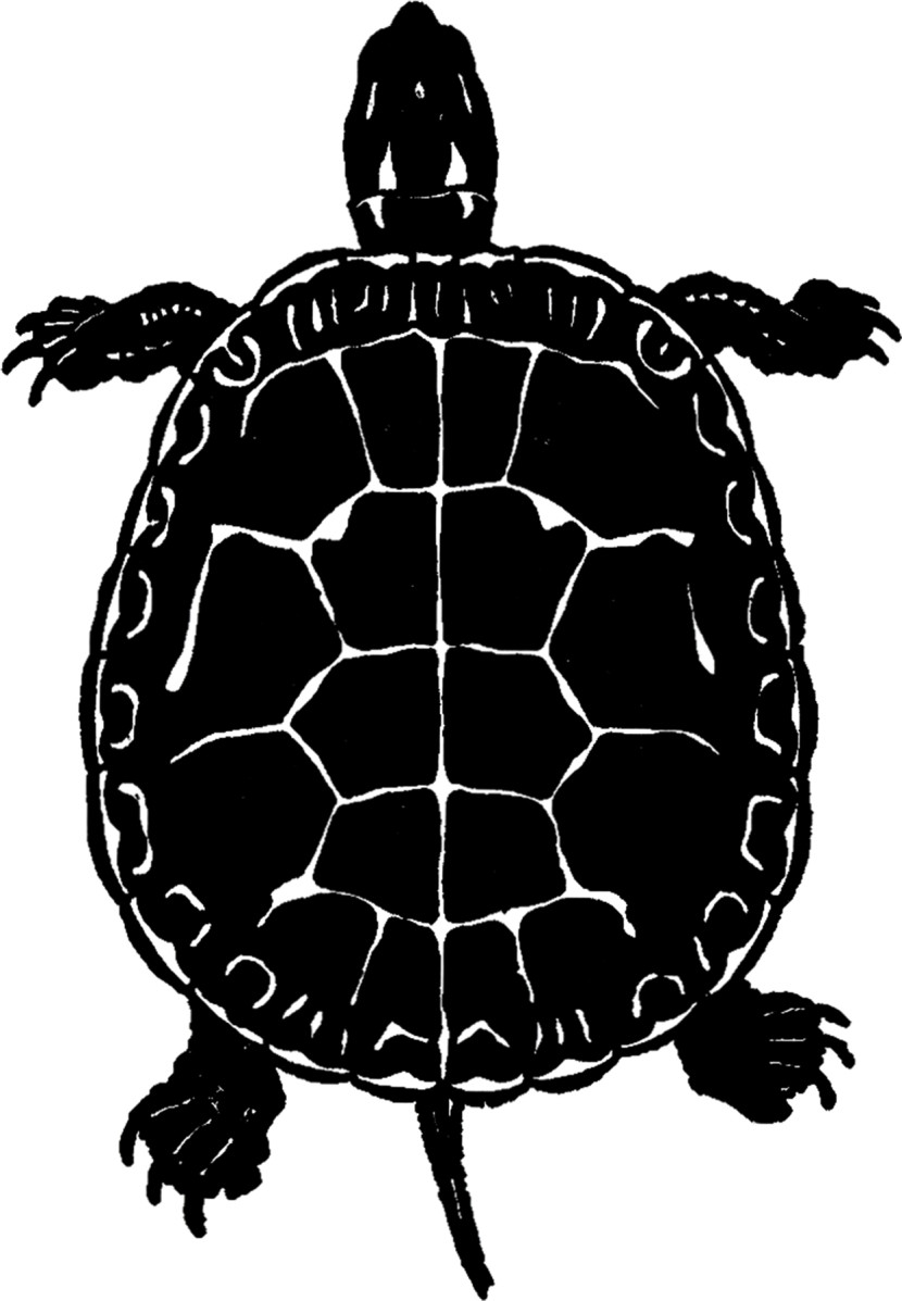 Public Domain Turtle Image Silhouette The Graphics Fairy