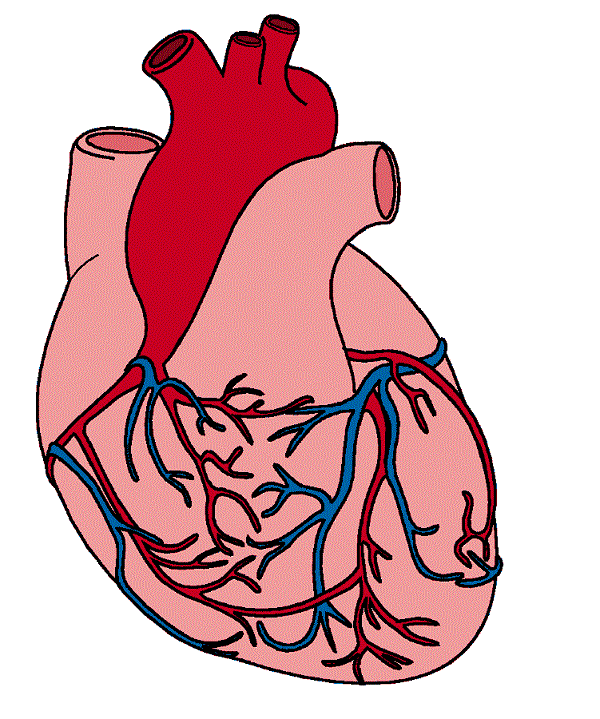 Real Heart Clipart