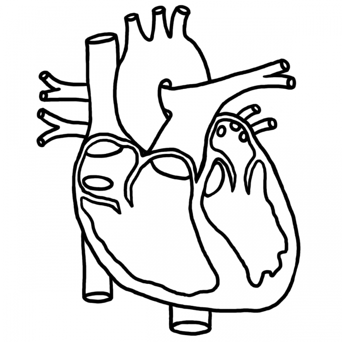 Real Heart Drawing Free Clipart Images