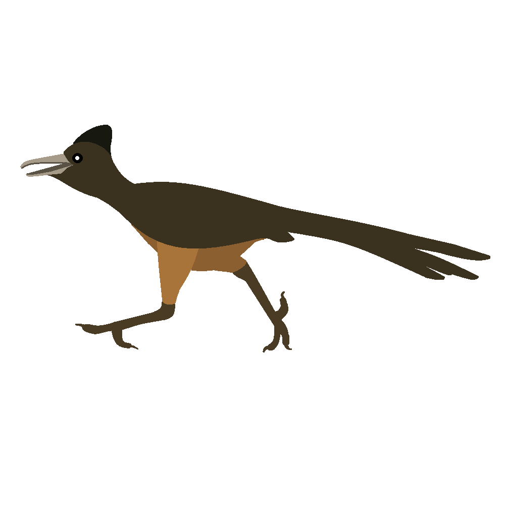Road Runner Bird Muscle Clipart Free Clip Art Images