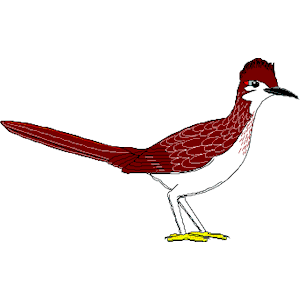 Road Runner Graphics Clipart