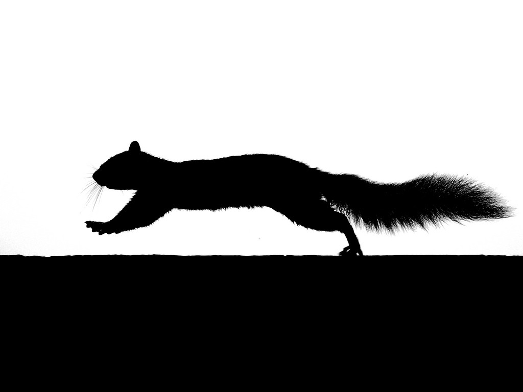 Running Squirrel Silhouette Flickr Photo Sharing