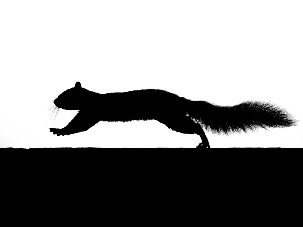 Best Squirrel Silhouette #7592 - Clipartion.com