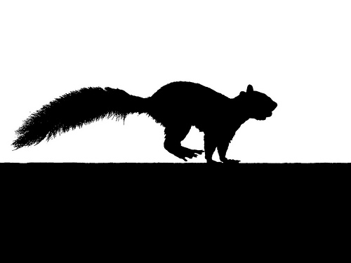Running Squirrel Silhouette With Nut Flickr Photo Sharing