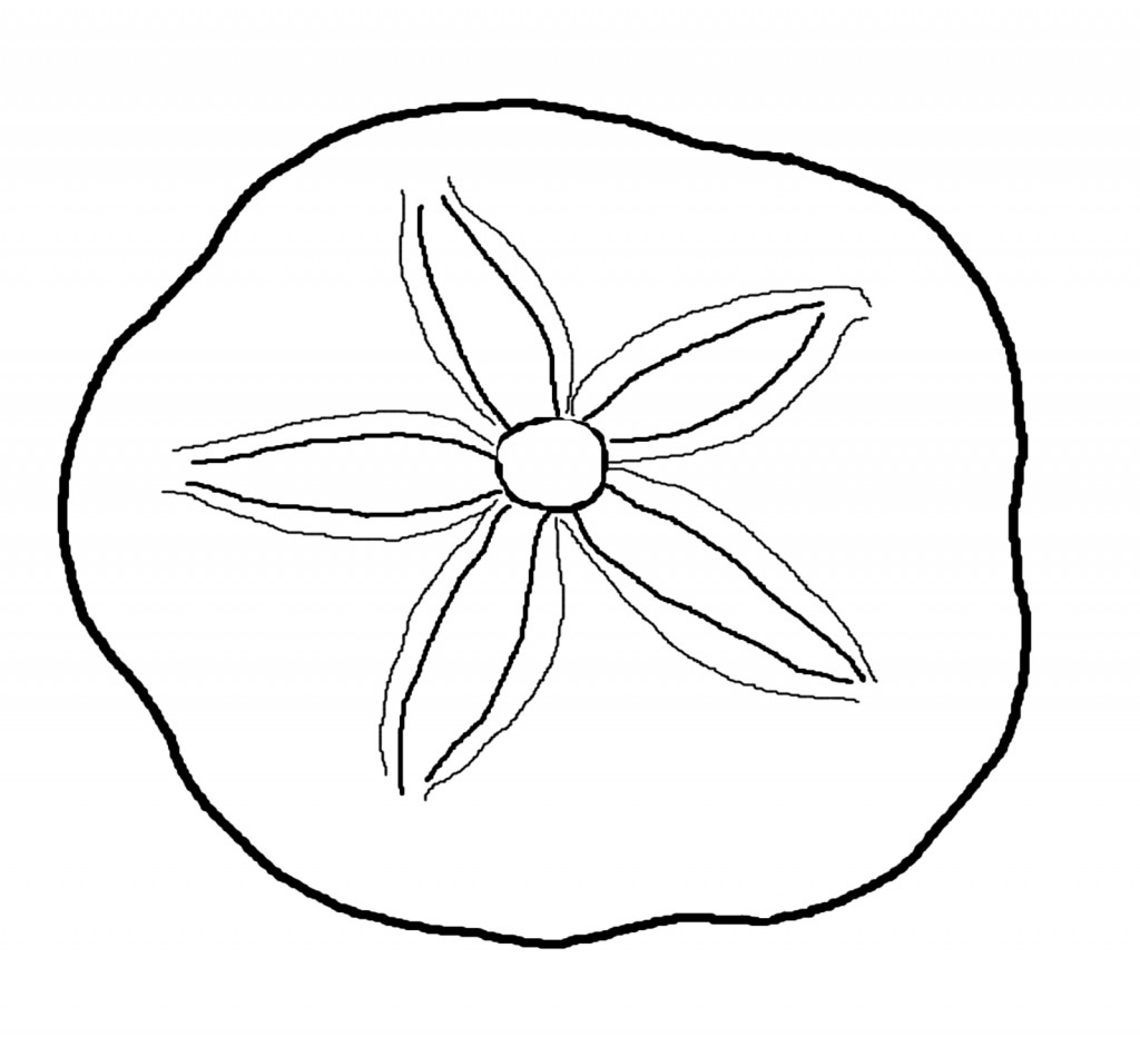 Sand Dollar Coloring Page