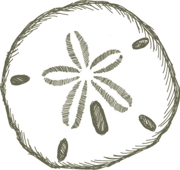 Sand Dollar Free Images At Vector Clip Art Online