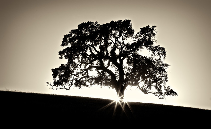 Save The Date On Pinterest Tree Silhouette Oak Tree And Silhouette