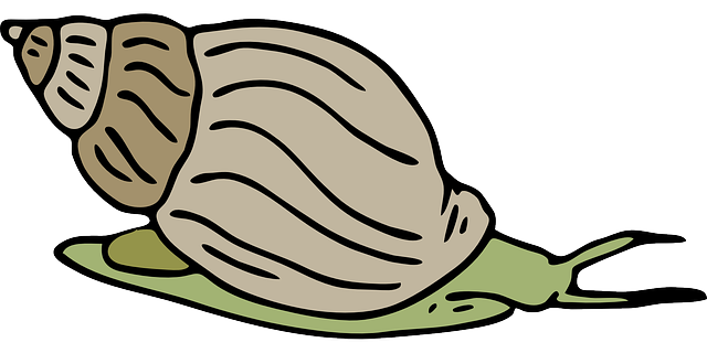 Sea Snail Clipart Free Clipart Images
