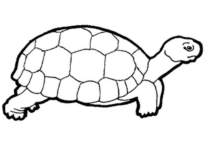 Best Turtle Clipart Black And White #12955 - Clipartion.com