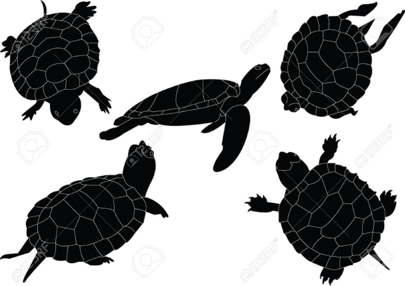 Sea Turtle Silhouette Vector Gallery