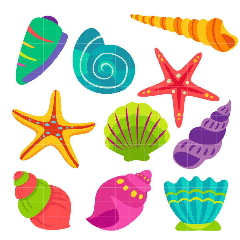 Seashells Set Semi Exclusive For Digitizing And More Clipart
