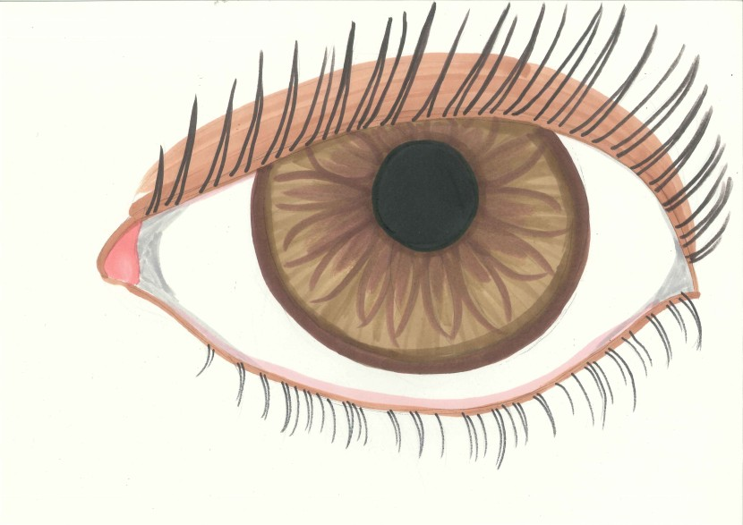 brown eyes clipart clipartion com eyes clip art cartoon eyes clip art cartoon
